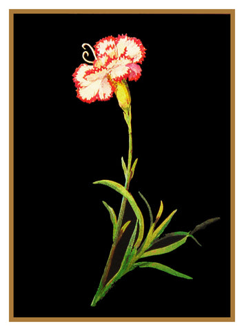 Jersey Pink Dianthus Flower by Mary Delany Counted Cross Stitch or Counted Needlepoint  Pattern