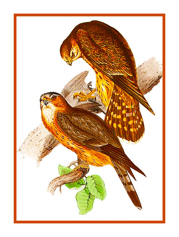 Merlin Falcon Naturalist by John Gould of Birds Counted Cross Stitch or Counted Needlepoint Pattern