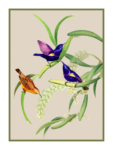 Purple Sunbirds by Naturalist John Gould of Birds Counted Cross Stitch or Counted Needlepoint Pattern