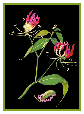 Flame Lily Flowers by Mary Delany Counted Cross Stitch or Counted Needlepoint Pattern