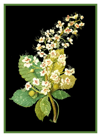 Horse Chestnut Blossom Flower by Mary Delany Counted Cross Stitch or Counted Needlepoint  Pattern