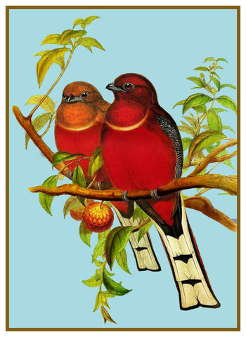 Red Headed Lovebirds Trogon by Naturalist John Gould of Birds Counted Cross Stitch Pattern