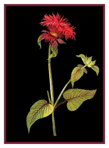 Red Bee Balm Flower by Mary Delany Counted Cross Stitch or Counted Needlepoint Pattern