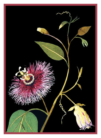 Passion Flower by Mary Delany Counted Cross Stitch or Counted Needlepoint Pattern