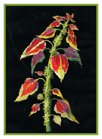 Coleus Plant Plectranthus by Mary Delany Counted Cross Stitch or Counted Needlepoint  Pattern