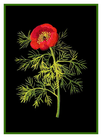 Fine Leaved Red Poppy Flower by Mary Delany Counted Cross Stitch or Counted Needlepoint  Pattern