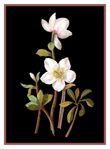 Lenten Rose Flowers Helleborus by Mary Delany Counted Cross Stitch Pattern DIGITAL DOWNLOAD