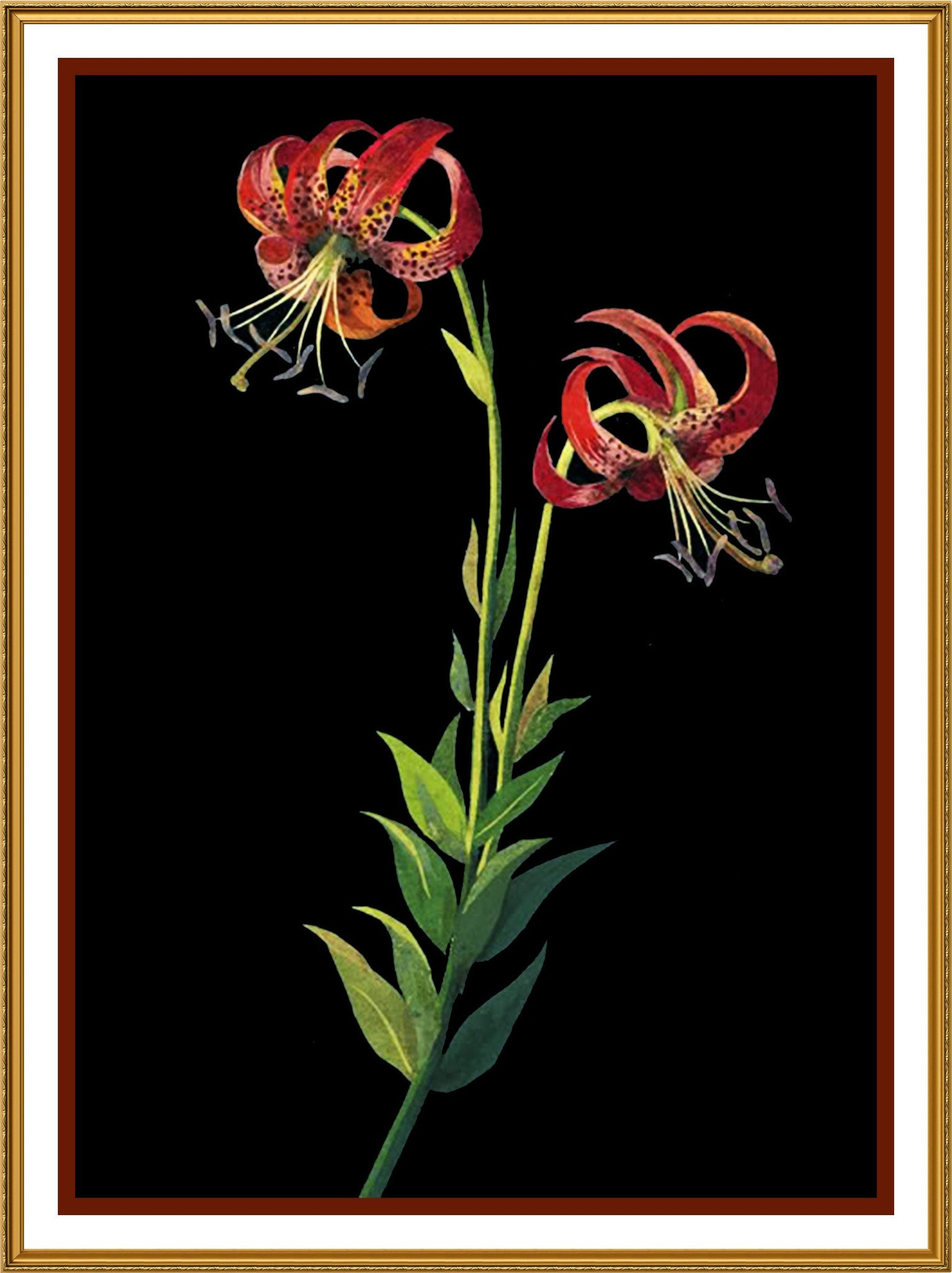 Tiger lily flowers by mary delany counted cross stitch or counted tiger lily flowers by mary delany counted cross stitch or counted needlepoint pattern izmirmasajfo