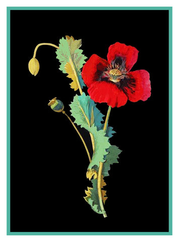Red Poppy Flower by Mary Delany Counted Cross Stitch or Counted Needlepoint Pattern