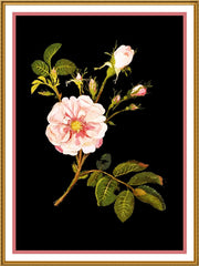 Blush Damask Rose Flowers Cluster by Mary Delany Counted Cross Stitch or Counted Needlepoint Pattern - Orenco Originals LLC