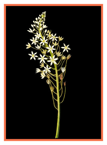 Star of Bethlehem Flowers by Mary Delany Counted Cross Stitch or Counted Needlepoint Pattern