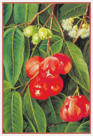 Marianne North's Fruit Flowers Jamboa Java Plant Counted Cross Stitch Pattern