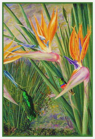 Marianne North's Bird of Paradise  and Humming Bird Counted Cross Stitch Pattern