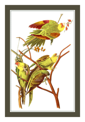 Pair of Parakeet Birds Illustration by John James Audubon Counted Cross Stitch Pattern