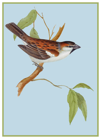 Domestic Swallow by Naturalist John Gould Bird Counted Cross Stitch Pattern