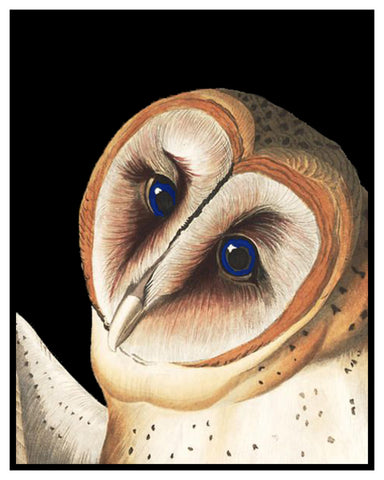 Barn Owl detail Bird Illustration by John James Audubon Counted Cross Stitch Pattern