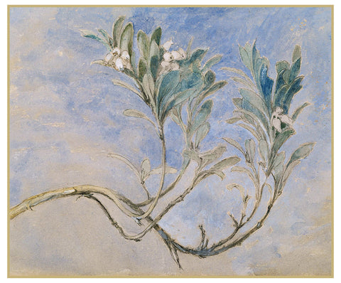 Study of Myrtle Sprig by John Ruskin Counted Cross Stitch or Counted Needlepoint Pattern