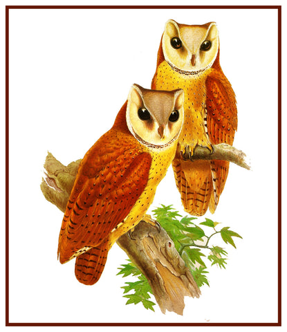 Bay Owls by Naturalist John Gould Illustration Birds Counted Cross Stitch Pattern