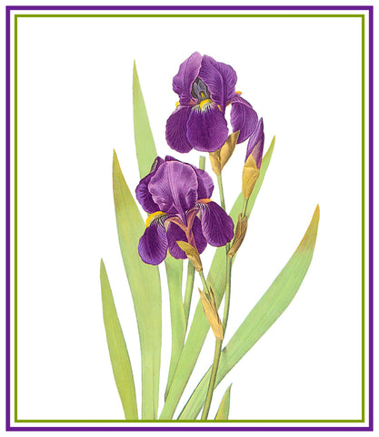 Bearded Iris Flower Inspired by Pierre-Joseph Redoute Counted Cross Stitch Pattern
