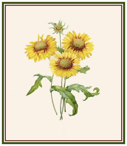 Blanket Sunflowers Inspired by Pierre-Joseph Redoute Counted Cross Stitch Pattern DIGITAL DOWNLOAD