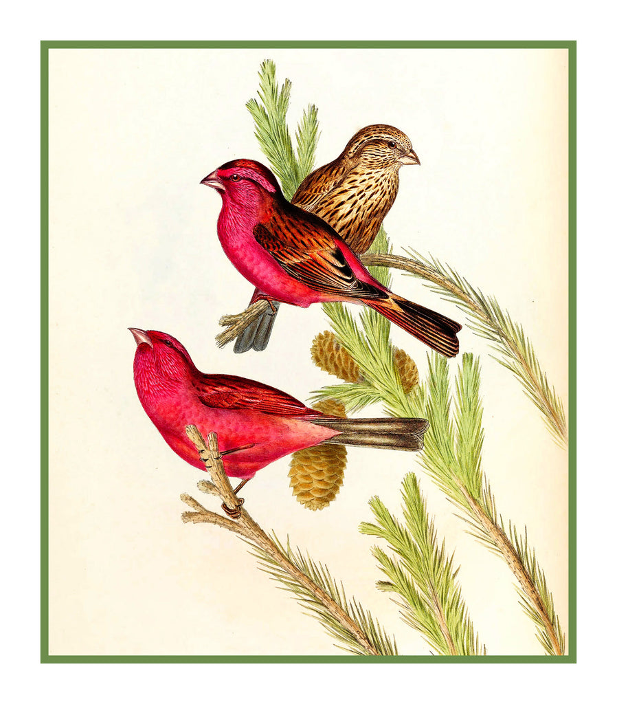 Blythes Rose Finch by Naturalist John Gould of Bird Counted Cross Stitch or Counted Needlepoint Pattern