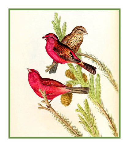 Blythes Rose Finch by Naturalist John Gould of Bird Counted Cross Stitch Pattern