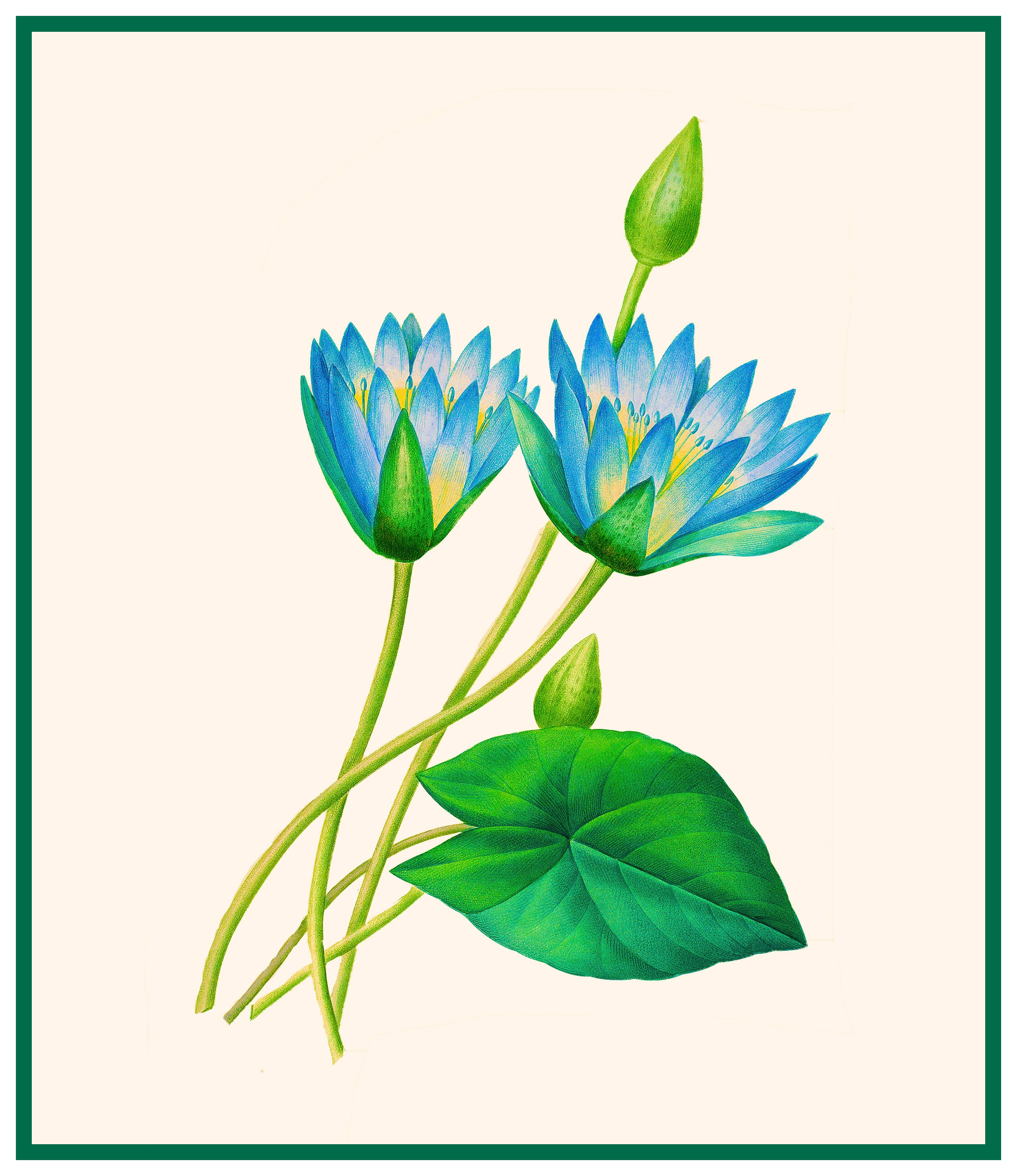 Egyptian Lotus Flowers Inspired By Pierre Joseph Redoute Counted
