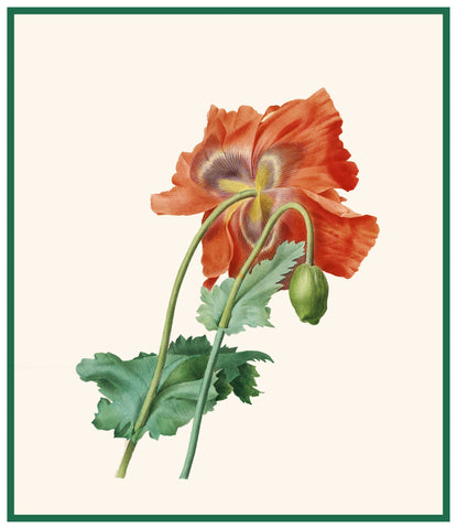 Red Poppy Flower Inspired by Pierre-Joseph Redoute Counted Cross Stitch Pattern DIGITAL DOWNLOAD
