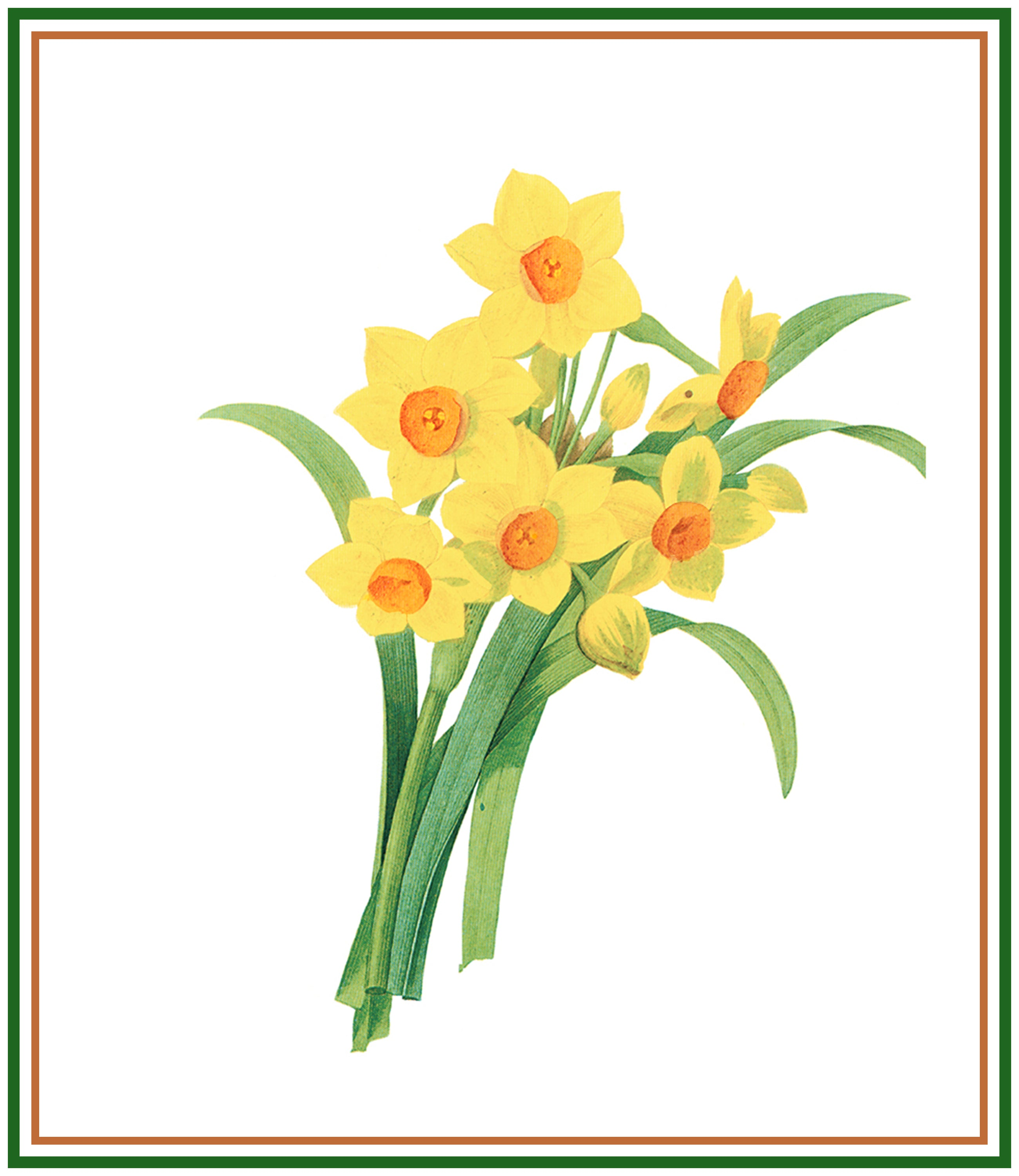 Orenco Originals Narcissus Flower by Pierre-Joseph Redoute Counted Cross Stitch Pattern