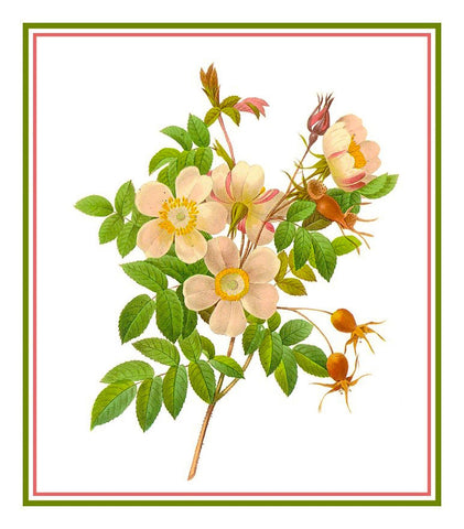 Candolle Rose Flowers Inspired by Pierre-Joseph Redoute Counted Cross Stitch Pattern DIGITAL DOWNLOAD