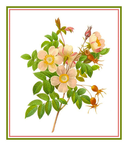 Candolle Rose Flowers Inspired by Pierre-Joseph Redoute Counted Cross Stitch Pattern