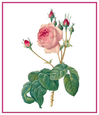 Centifolia Bullata Rose Flower Inspired by Pierre-Joseph Redoute Counted Cross Stitch Pattern DIGITAL DOWNLOAD