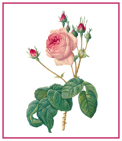 Centifolia Bullata Rose Flower Inspired by Pierre-Joseph Redoute Counted Cross Stitch Pattern