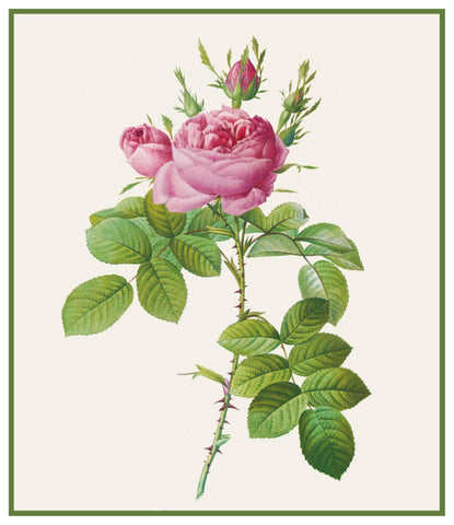 Bifera Officinalis Rose Flowers Inspired by Pierre-Joseph Redoute Counted Cross Stitch Pattern
