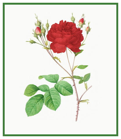 Centifolia Anglica Rubra Rose Flowers Inspired by Pierre-Joseph Redoute Counted Cross Stitch Pattern