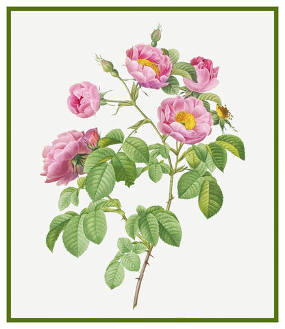 Tomentose Rose Flowers Inspired by Pierre-Joseph Redoute Counted Cross Stitch Pattern DIGITAL DOWNLOAD