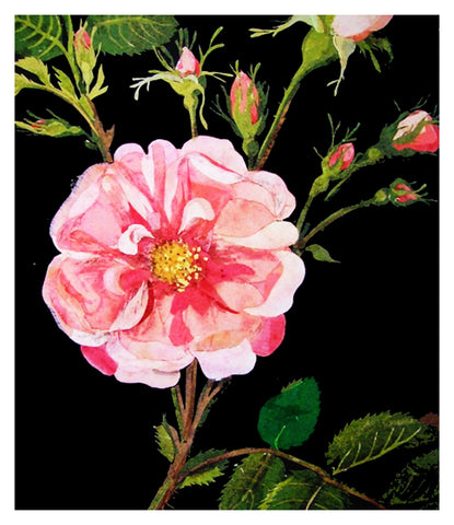 Gallica Rose Flowers by Mary Delany Counted Cross Stitch Pattern