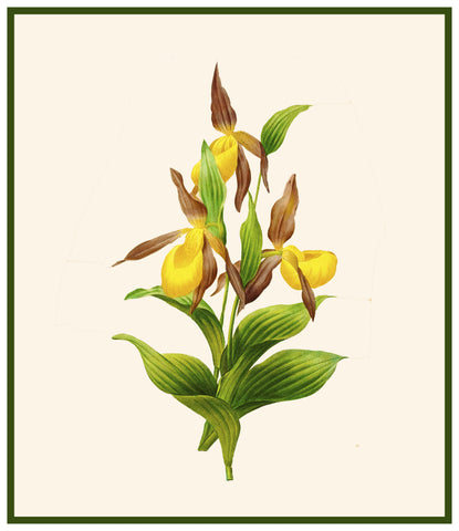 Pierre Redoute/'s Flower Illustration of Corn Lily Counted Cross Stitch Pattern