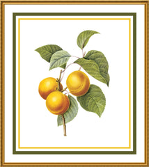 Apricots Botanical Inspired by Pierre-Joseph Redoute Counted Cross Stitch or Counted Needlepoint Pattern - Orenco Originals LLC