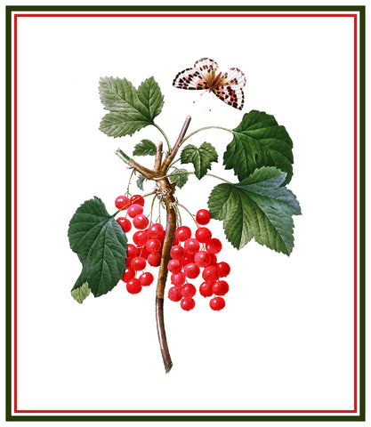 Red Currant Berries Inspired by Pierre-Joseph Redoute Counted Cross Stitch Pattern