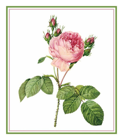 Cabbage Rose Flower Inspired by Pierre-Joseph Redoute Counted Cross Stitch Pattern DIGITAL DOWNLOAD