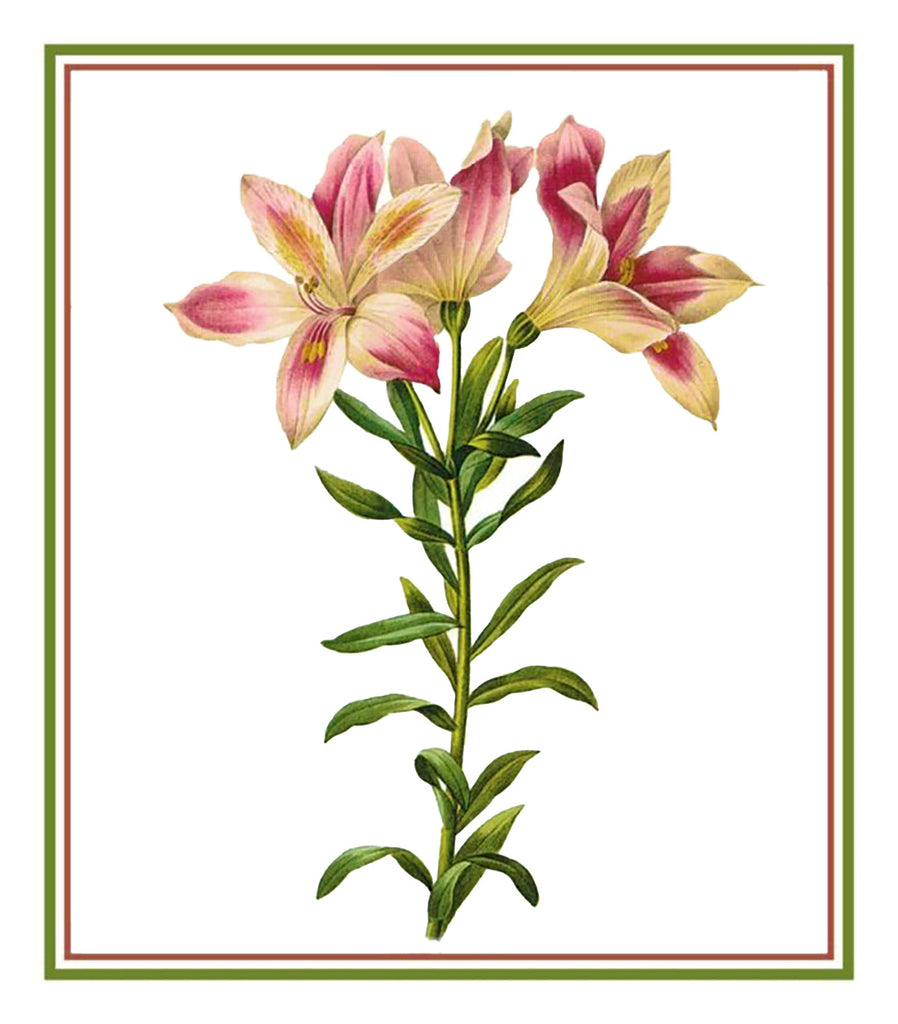 Pierre-Joseph Redoute's Flower Illustration of Peruvian Lily Counted Cross Stitch Chart