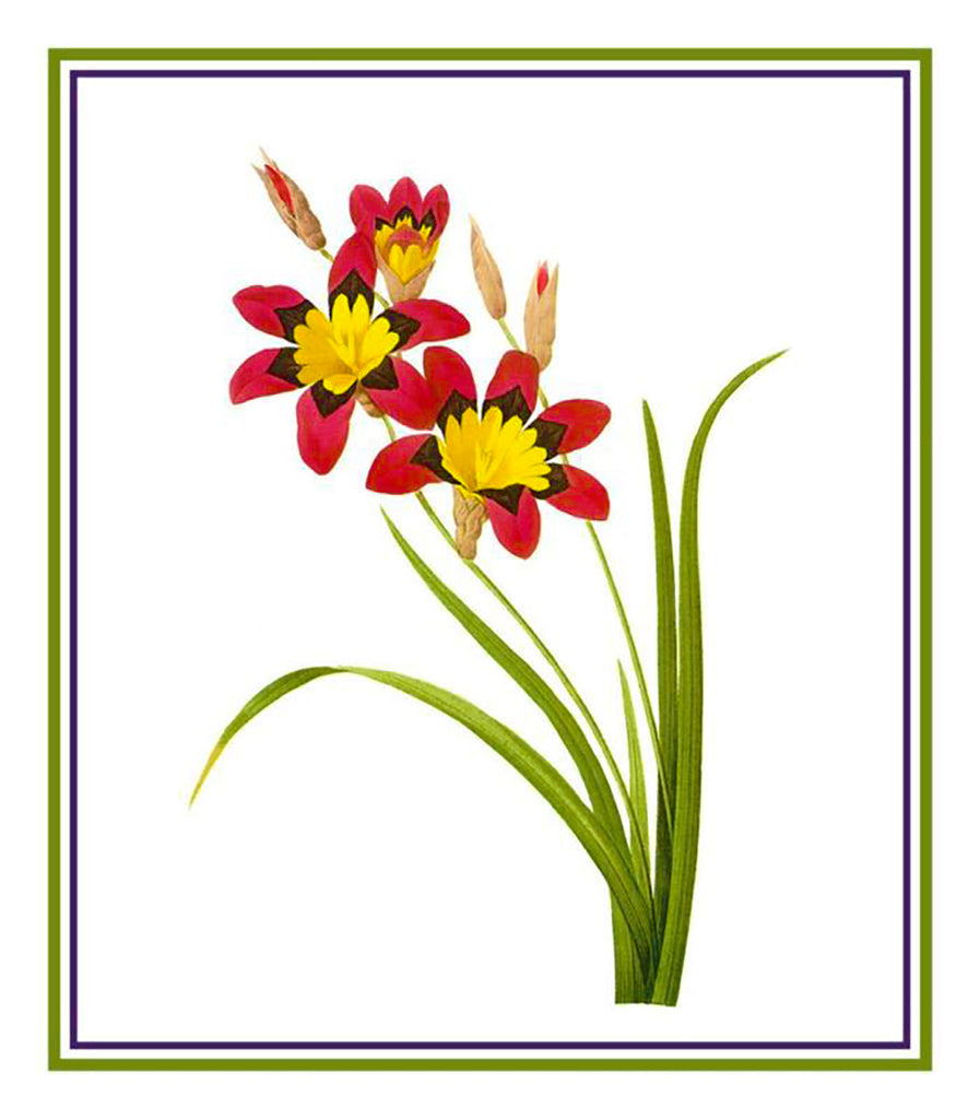 Corn Lily Flower Inspired by  Pierre-Joseph Redoute Counted Cross Stitch  Pattern - Orenco Originals LLC