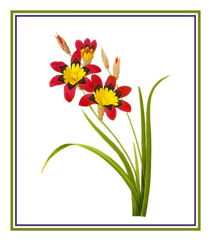 Corn Lily Flower Inspired by  Pierre-Joseph Redoute Counted Cross Stitch or Counted Needlepoint Pattern