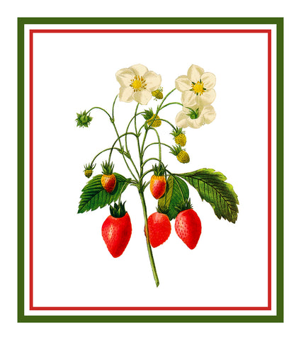 Strawberries Botanical Inspired by Pierre-Joseph Redoute Counted Cross Stitch Pattern