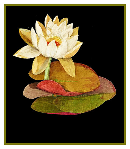 Water Lily Flower by Mary Delany Counted Cross Stitch or Counted Needlepoint Pattern