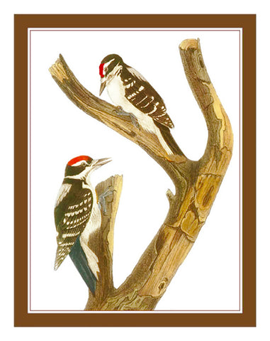 Pair of Woodpecker Birds Illustration by John James Audubon Counted Cross Stitch Pattern