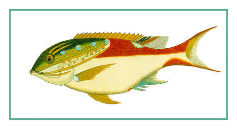 Fallours' Renard's Fantastic Colorful Tropical Fish 212 Counted Cross Stitch or Counted Needlepoint Pattern
