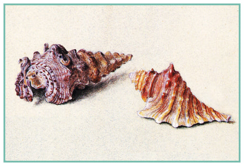 Study of 2 Shells by John Ruskin Counted Cross Stitch or Counted Needlepoint Pattern
