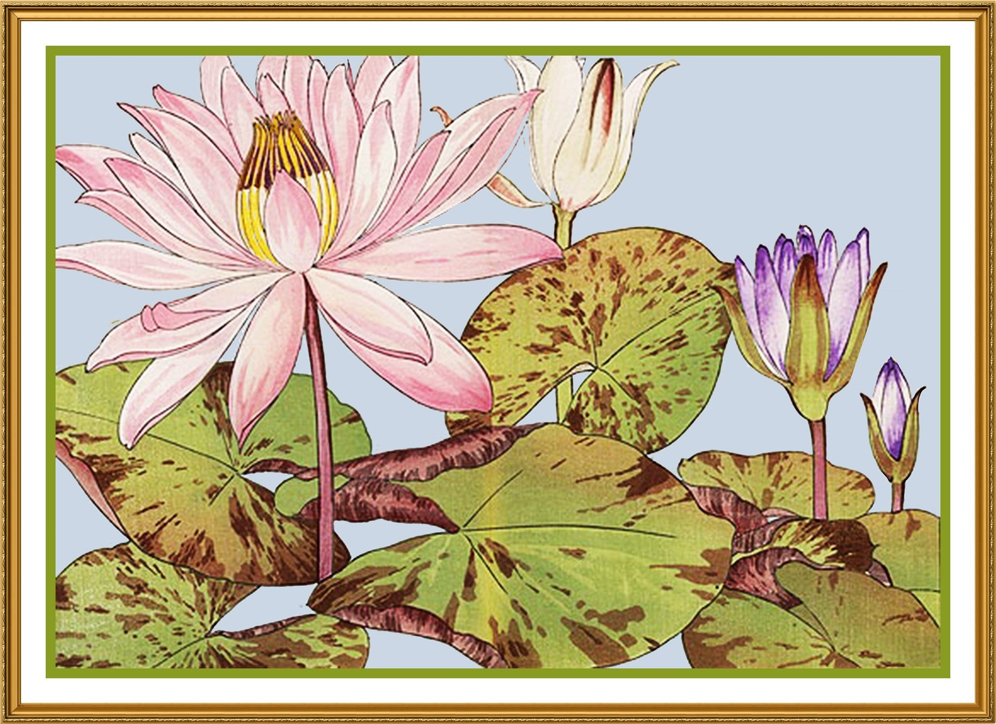 Tanigami Konan Asian Lotus Flower Counted Cross Stitch Or Counted